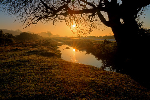 new uk morning england sun david reflection tree misty forest sunrise canon eos dawn hill bottom smith hampshire 7d hanging deadman rise hdr fordingbridge 1755mm b3078