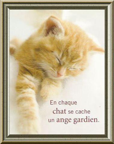 chat ange gardien