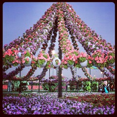 Its a #garden I would like to visit again. Fascinating.  #DubaiMiracleGarden #instagrammers #flowers #instapic #instagood #instauae #instamood