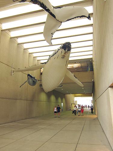 whale corridor