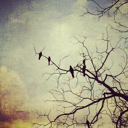 The Birds of San Antonio