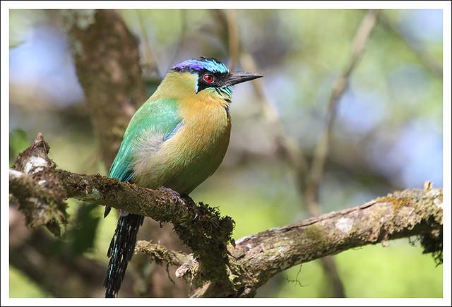 Monteverde Bird 1