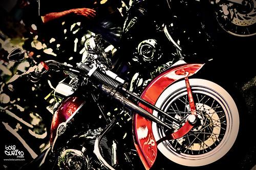 Harley Davidson Springuer