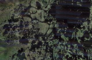 castal wetlands