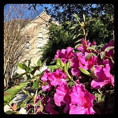flowers in bloom outside Gibson Hall #onlyattulane #tulane