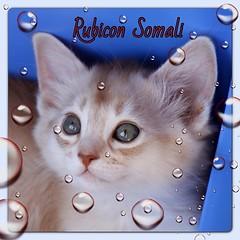 rubicon somali01