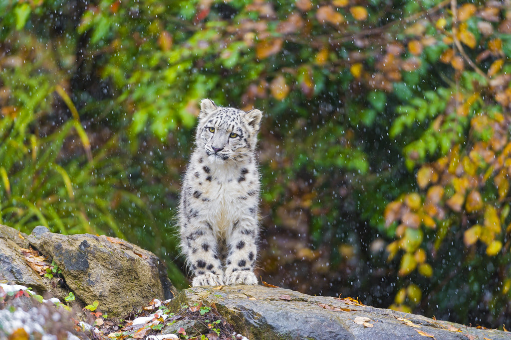 Mohan looking the snow fall