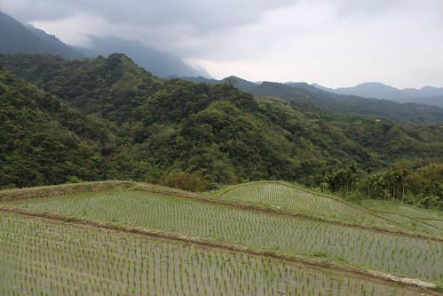 吉哈拉艾美麗的水梯田。