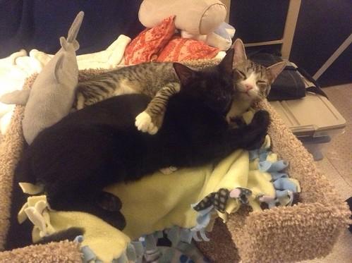 Kittens on Cat Lounge
