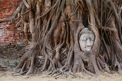 頓悟與自在 Insight and comfortable ~Ayutthaya 大城,Wat Phra Mahathat,Buddha head in banyan tree~