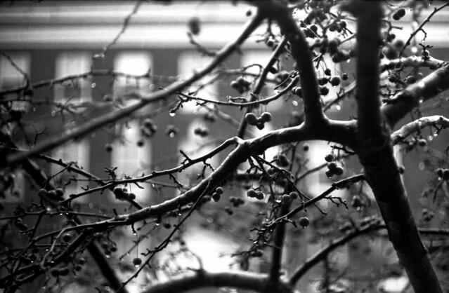 9 March 2013 IIIf Summicron Arista 400 Street FD Ardmore  Still Winter