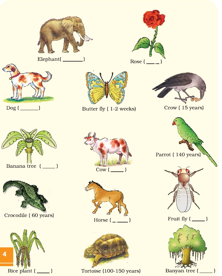 reproduction in organisms Sexual and asexual reproduction have advantages and disadvantages—which is why some organisms do both click or tap an organism below after reading a description.