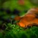 Esperanza / Fork-tailed Bush Katydid por s7r4n9e1e7
