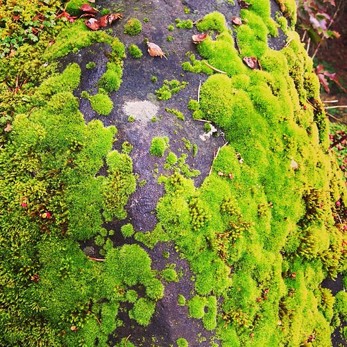 My friend, Moss #pdx #oregon #moss