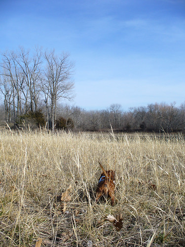 2013-02-17 - Ralphie Digging - 0003