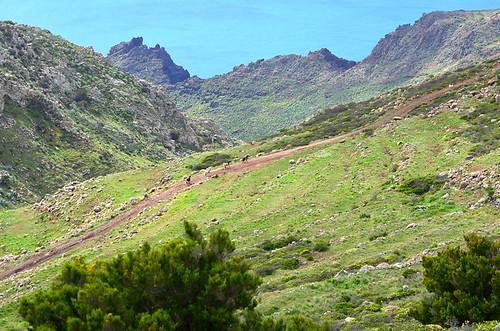 Teno Mountains, Tenerife