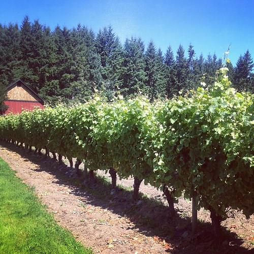 whidbey island winery washington wine
