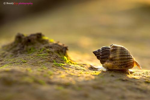 sunset seascape macro green beach closeup canon insect rebel seascapes shell scene 100mm oman f28 muscat t3i 600d canon100mm 2013 macrocloseup eflens beautyeye ø¹ùø§ù canon600d lensused rebelt3i kissx5 canon600deos omanø¹ùø§ùø³ùø·ùø©ø³ùø·ùùomancountry ùø§ùùù