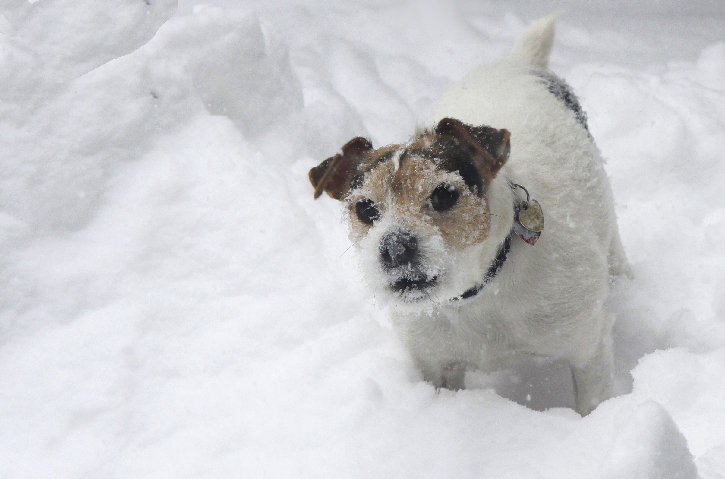 doggie in the snow5