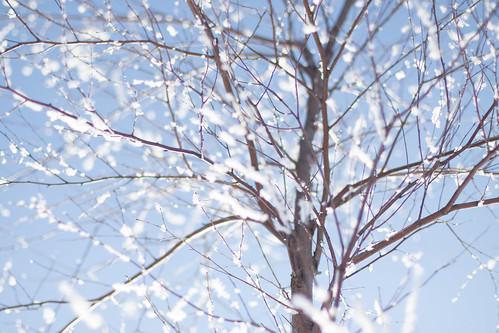Vårvintermorgon