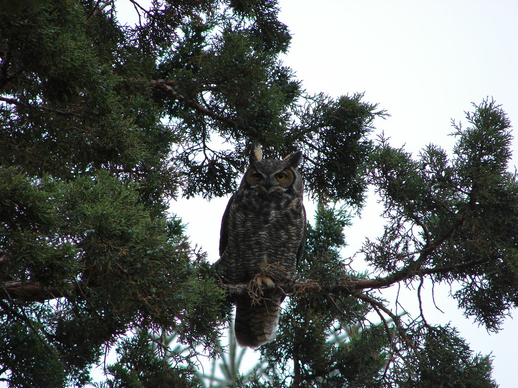 Owl in Central Oregon after the hike