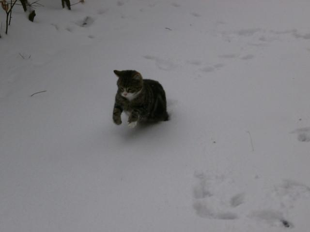 13-03-10 Wintereinbruch