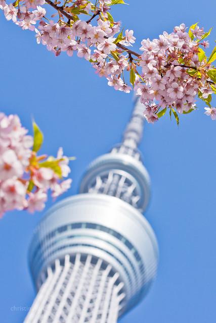 Tokyo Skytree with sakura (東京スカイツリーと桜)