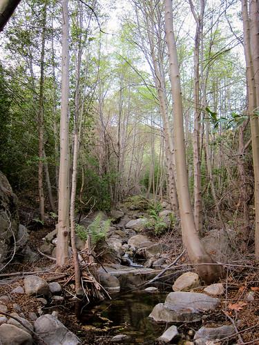 Murietta tributary.
