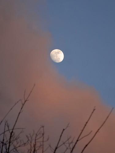 moon over the maple tree by mainesandy