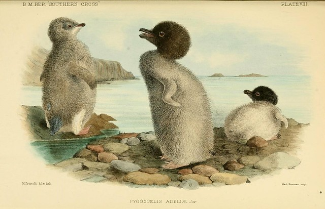 "Report on the collections of natural history made in the Antarctic regions during the voyage of the ""Southern Cross."""