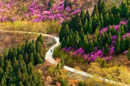 korea-spring.jpg