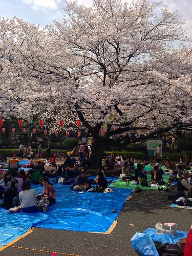 Tokyo's Ueno Park Cherry Blossom Hanami