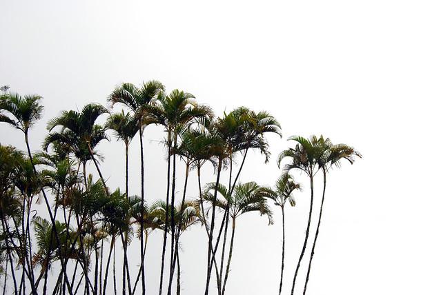 Akaka Palms