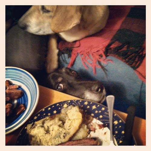 Lola creepin on dinner, with a little Sophie photobomb in the background #dogstagram