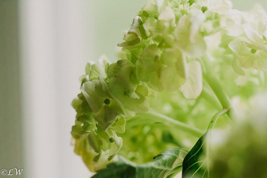 nurturegreen1