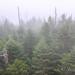 Pine trees & Mist, Clingmans Dome. August 2016
