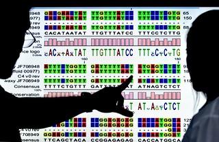 NP Cassava Genome