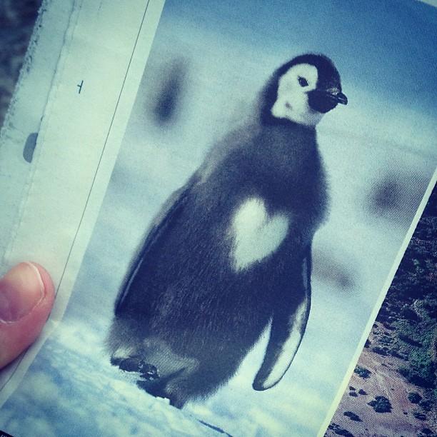 Varsågod. Mitt bidrag till #allahjärtansdag - en pingvin med hjärtmage. #göll