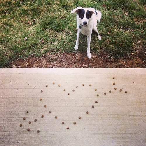 Riley's #1 love? Kibbles.