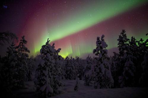 [フリー画像素材] 自然風景, オーロラ, 夜空, 森林, 雪, 風景 - フィンランド ID:201302242000