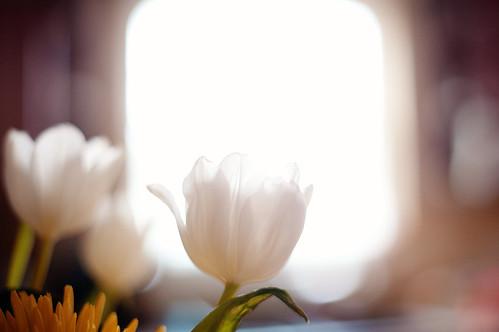 flower 7796