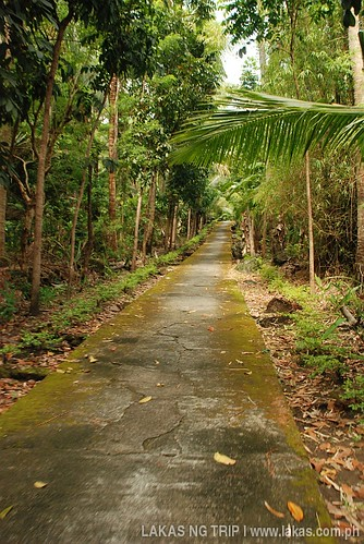 Mossy Road around Banton Island