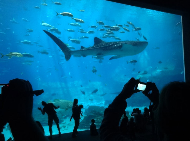 whale-shark-aquarium