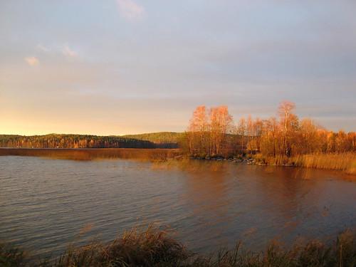morning autumn trees lake nature sunrise suomi finland purple jyväskylä jyvaskyla 2007 luminance purplesky keskisuomi centralfinland nenäinniemi nenainniemi