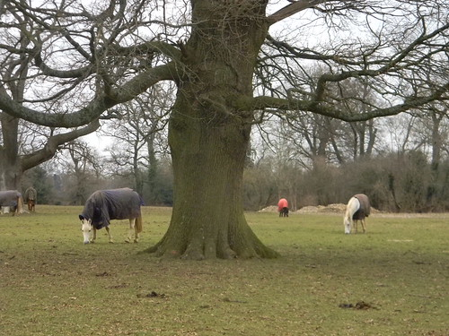 Horses round a tree