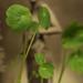 New plants by Jolika