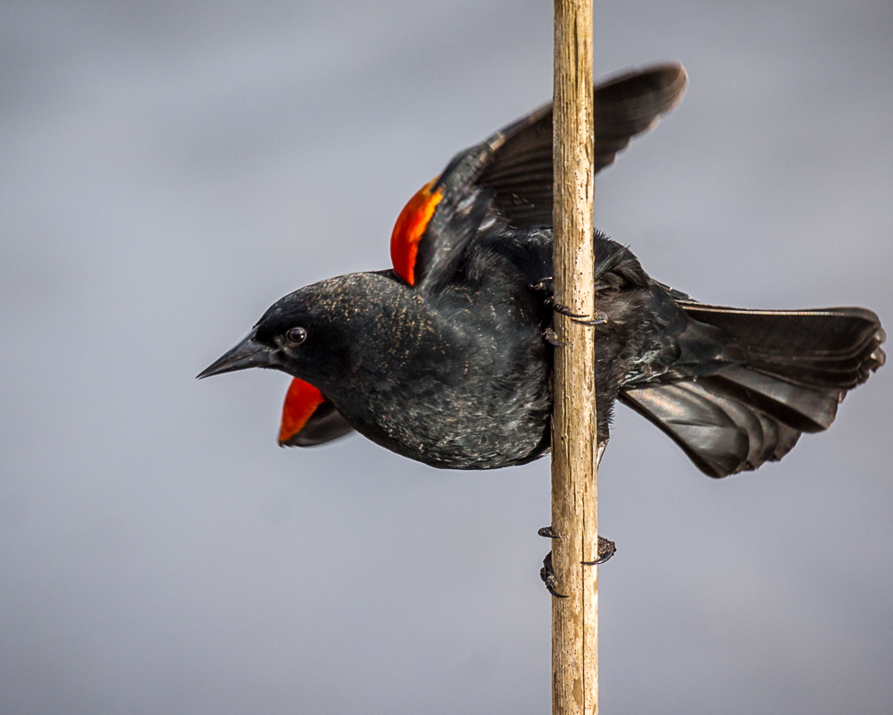 Todays Birds