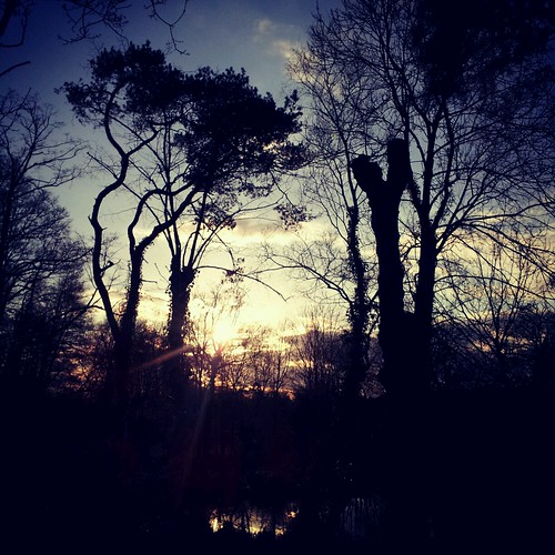 trees light sunset reflection woodland walking evening march pond woods quiet peaceful surrey galaxy android wintersun sunsetlovers flickrandroidapp:filter=none beatsshopping