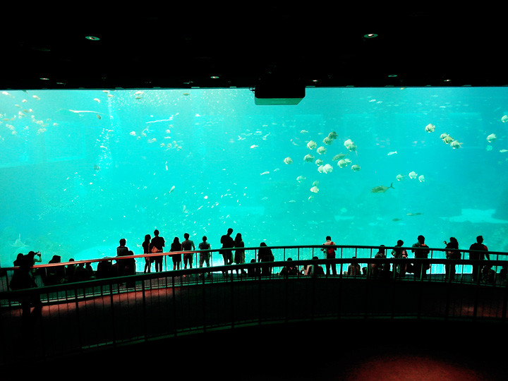 world's largest aquarium