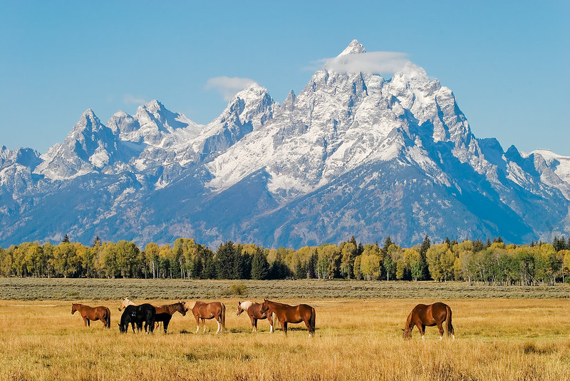 Top 10 US National Parks: Horses in Grand Teton National Park